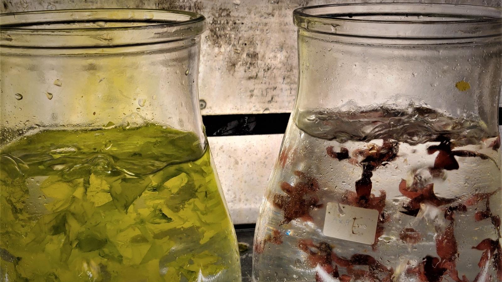 Pure Algae
