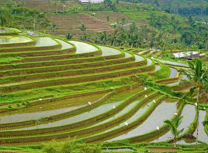 Indonesiens nye hovedstad